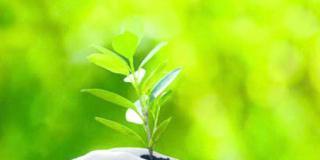 Eventi per famiglie: conoscere le piante con Aboca a Senigallia