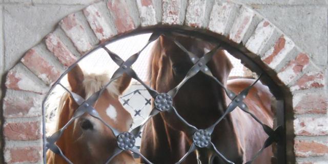 Campi estivi? In campagna tra i pony vicino a Pavia