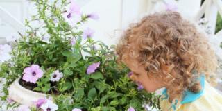 Piante velenose in casa: gli errori da evitare con i bambini