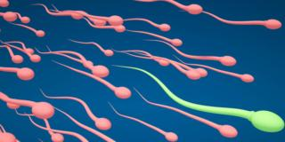 Infertilità maschile: il calore riduce la produzione di spermatozoi