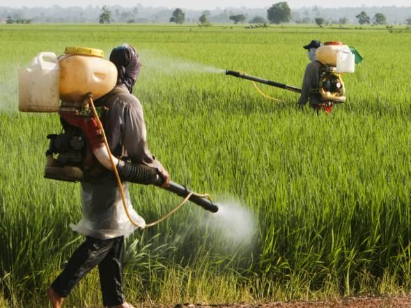 Risultati immagini per famiglia pesticidi