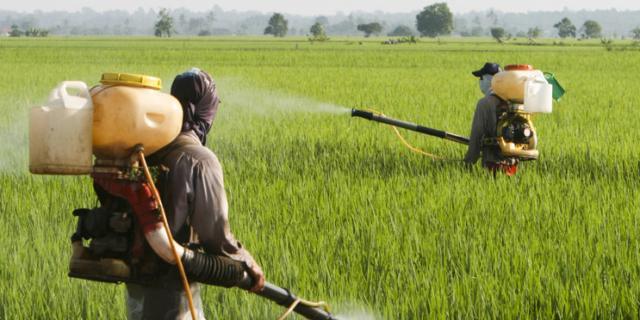 Pesticidi negli alimenti? Attenzione fino ai 10 anni