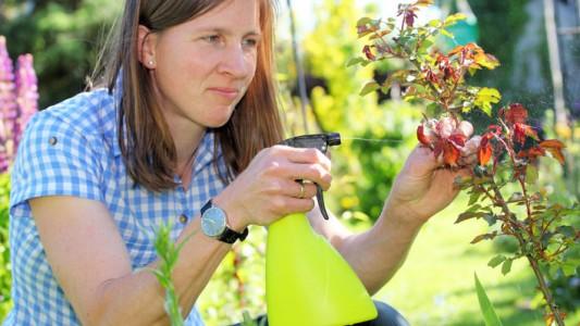 Endometriosi: sotto accusa due pesticidi