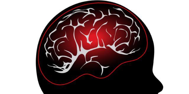 Cervello del bambino cresce più lentamente di quello degli scimpanzé