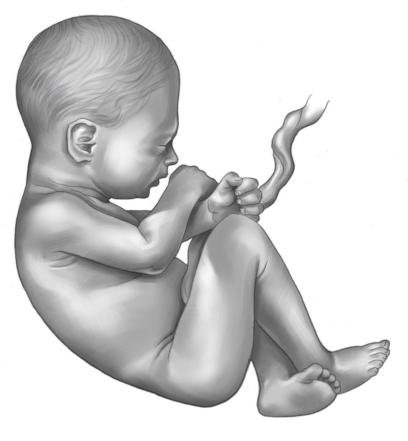 8°mese gravidanza