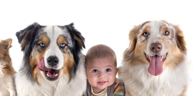 Muffe e peli animali e le allergie respiratorie