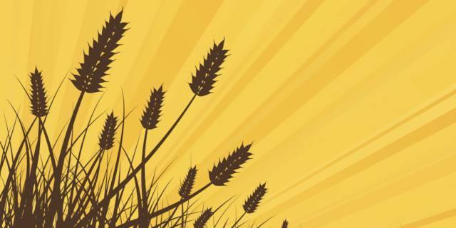 Il grano saraceno – Andersen