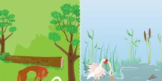 La volpe e la cicogna – Fedro – BimbiSani e Belli