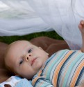 Punture d'insetto e il bambino