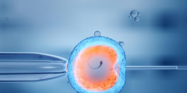Fecondazione assistita: meno rischi con un solo ovocita