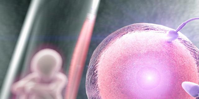 Fecondazione assistita, una proteina indica il successo della terapia