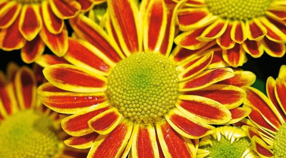 Ci vuole un fiore