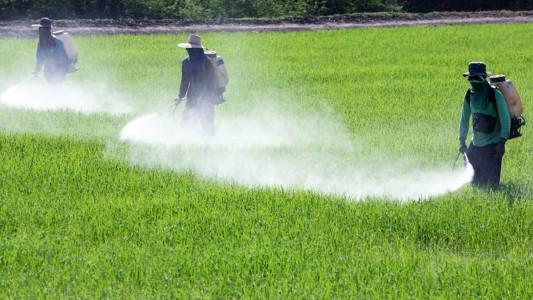 Infertilità maschile: può dipendere dai pesticidi