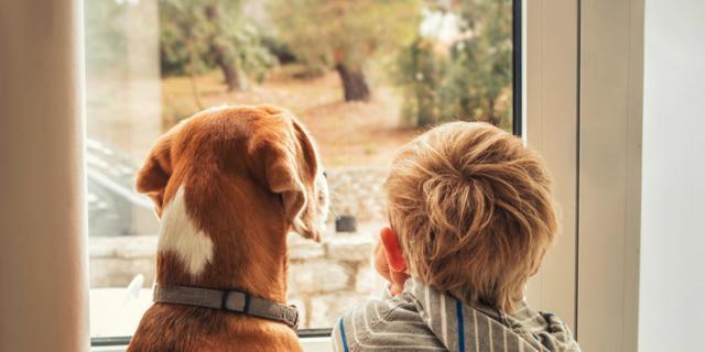 Ansia: meno rischi se il bambino cresce con un cane