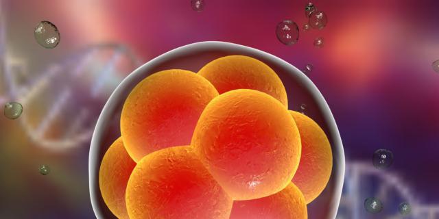 Embrioni sotto esame: che succede a inizio gravidanza?