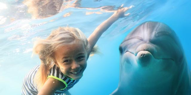 Alla scoperta del Santuario dei Cetacei