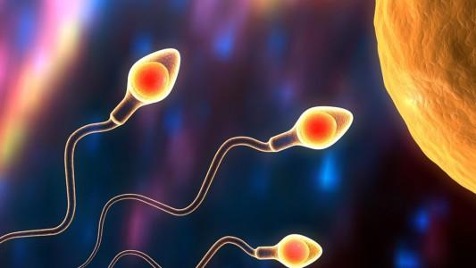 Dallo sperma di coccodrillo la risposta all'infertilità maschile?
