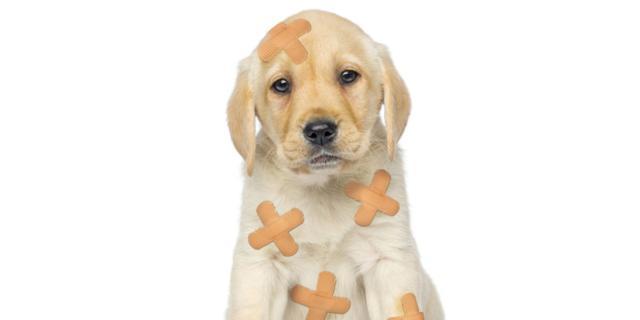 Zecche e pulci come difendere i cani dagli ospiti for Punture di pulci