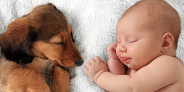 Asma e obesità: cani e gatti sono la cura!
