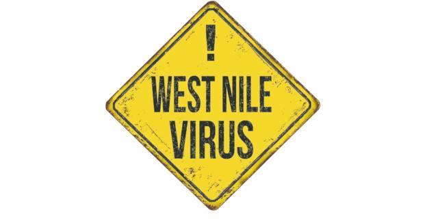 Febbre West Nile: 10 domande all'esperto