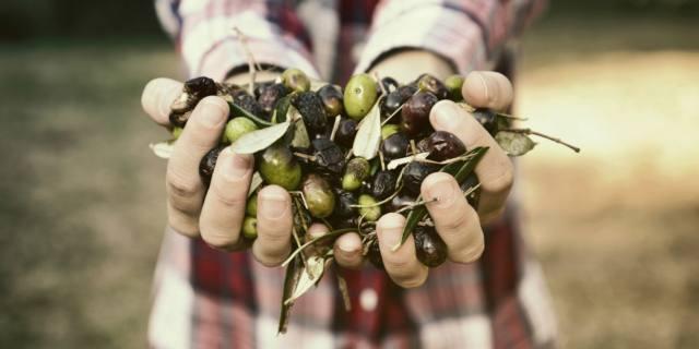 L'olio extravergine di oliva controlla la glicemia
