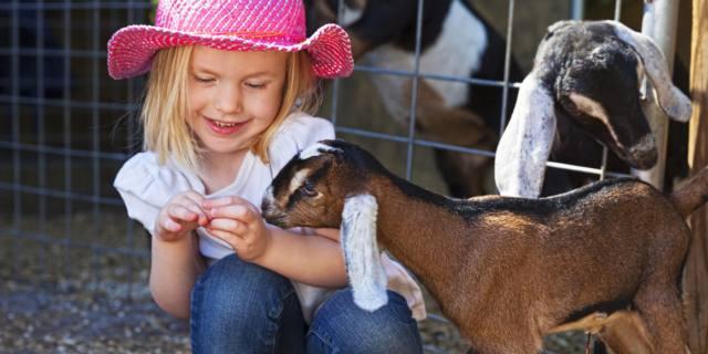 Asma e allergie nei bambini: prova con la pet therapy
