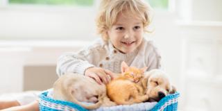 Cani e gatti: fondamentali per la crescita dei bambini