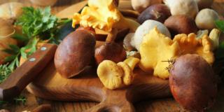 Tumore alla prostata: un aiuto dai funghi