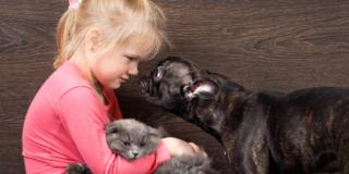 Cani e gatti contro solitudine e depressione
