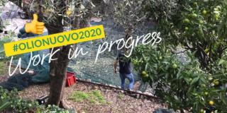 In Liguria è tempo di olio nuovo con Raineri