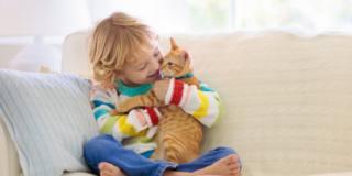 Allergia al gatto, una nuova immunoterapia può alleviarla