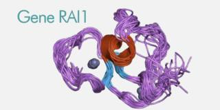 Continua la ricerca sul gene RAI1, fondamentale per l'embrione