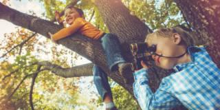 Gli alberi aiutano lo sviluppo del cervello